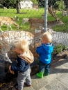 KDV-hertenkamp-kinderboerderij-005